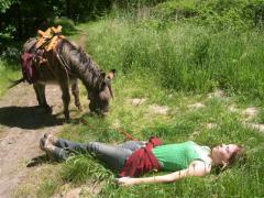 U maakt een wandeling met 1 van onze ezels (halve of hele dag) en overnacht daarna in één van onze pipowagens.