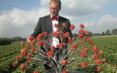 Jan Robben aardbeien