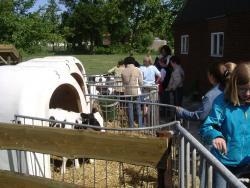 Kaasboerderij De Leyedaeler Excursie