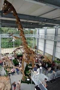 Kom en verbaas je over de omvang van het skelet van de 23 lange en 12 meter hoge Brachiosaurus.