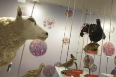 Natuurmuseum Brabant Brabant in de Ban van Buiten