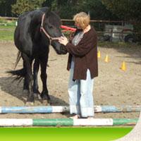 Nu nieuwe workshops waarbij het paard als middel ingezet wordt. Mindfulness, aan de slag met je zelfvertouwen en inzicht in je kwaliteiten. Kijk snel!