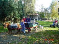 De kinderen kunnen op onze Boerderij lekker ravotten, de kalfjes mee verzorgen.enz.