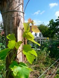 Wijnhoeve Koningbosch