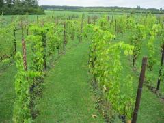 Huren van het druivenlabyrint voor workshops en coaching kan het gehele jaar.